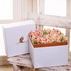 جعبه گل ژیوا سفید با گل آلسترومریا