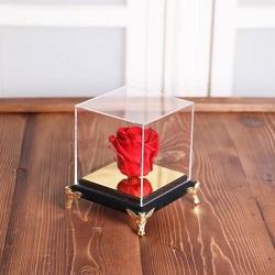 گل جاودان قرمز مکعبی